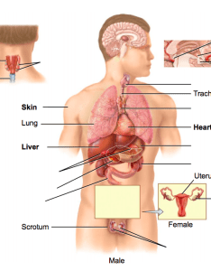 Location also endocrine system diagram quizlet rh