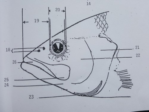 small resolution of fish head diagram quizlet snakehead fish diagram fish head diagram