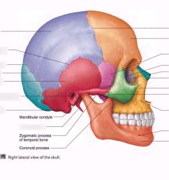 axial skeleton skull part ii diagram quizlet axial skeleton skull diagram [ 1024 x 768 Pixel ]