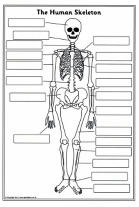 skeletal and muscular system diagram 2006 chevy 2500 radio wiring quizlet location