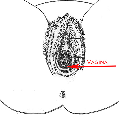Female Reproductive System (External View) with Diagrams