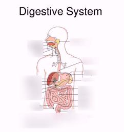 digestive system diagram fill in [ 1024 x 768 Pixel ]