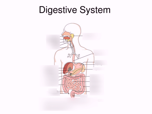 small resolution of digestive system diagram fill in