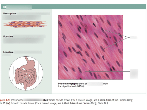 small resolution of smooth tissue diagram