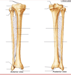 tibia fibula diagram inside wiring diagrams schematicpatella tibia fibula diagram quizlet diagram of femur and tibia [ 1024 x 797 Pixel ]