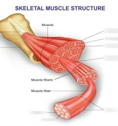foot structure diagram [ 1024 x 768 Pixel ]