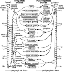 The Spinal Cord: The Spinal Cord For Dummies