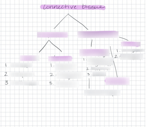 small resolution of terms in this set areolar connective tissue