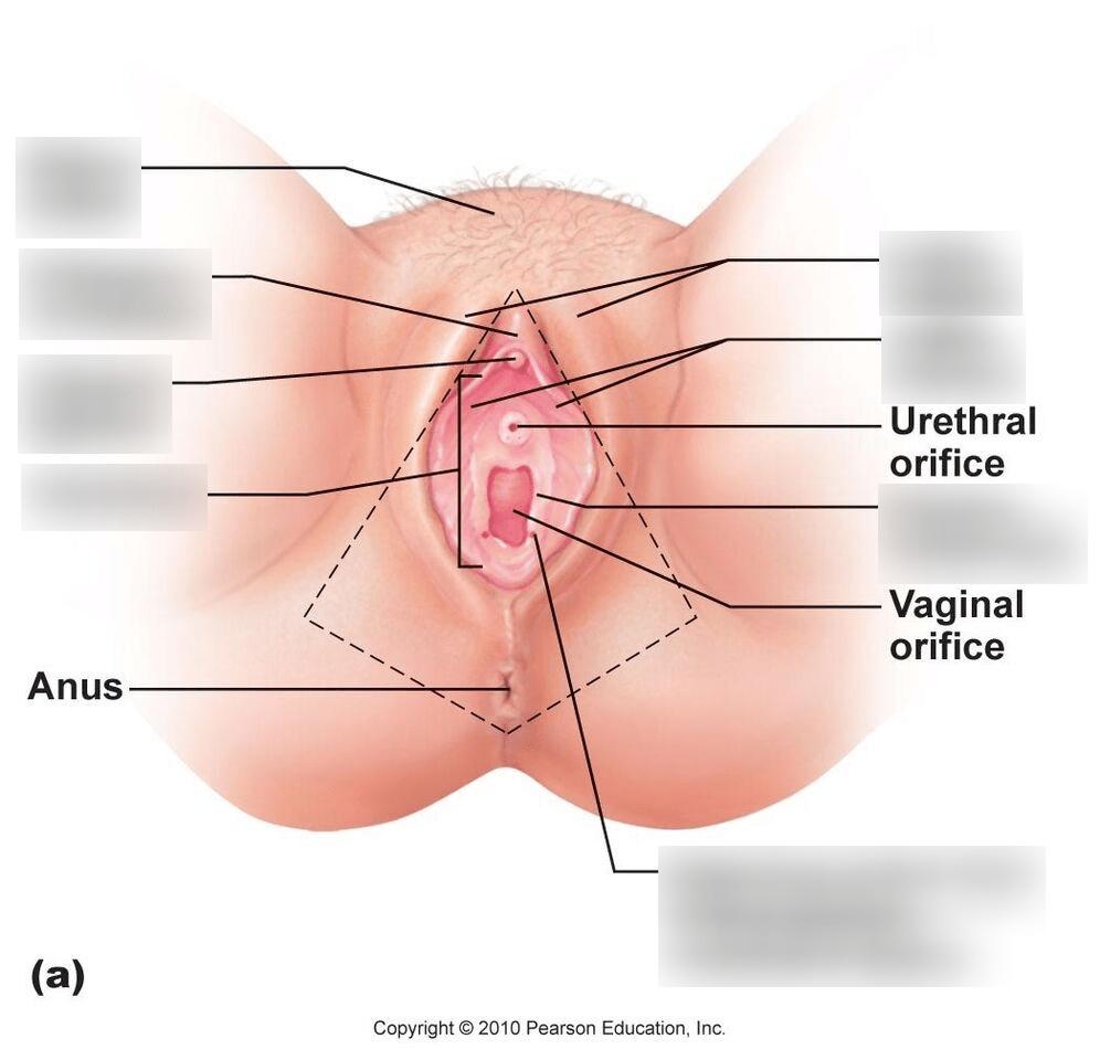 hight resolution of vagina pt 1