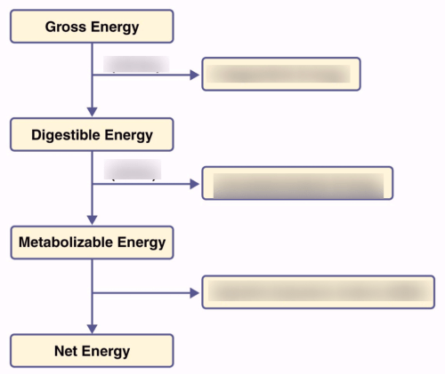 small resolution of digestion flow diagram