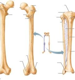 leg bone diagram [ 1024 x 816 Pixel ]