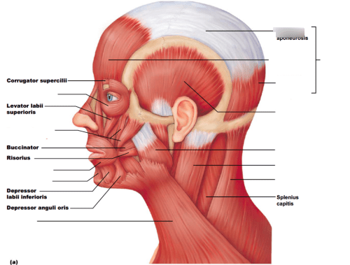 small resolution of diagram of head and chest