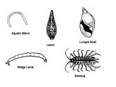 Life Science Review: Animal and Plant Classification