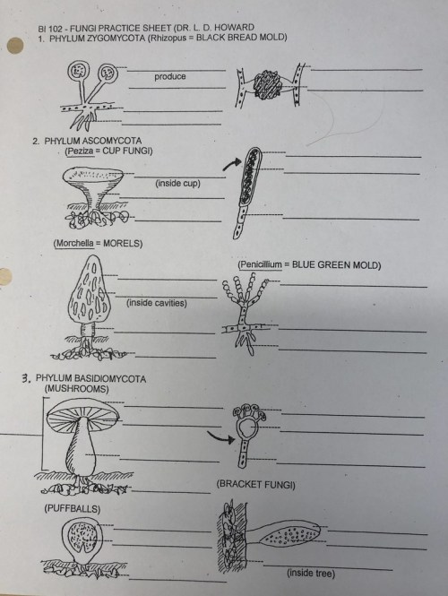 small resolution of fungi quiz diagram