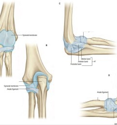 diagram of elbow [ 1024 x 835 Pixel ]