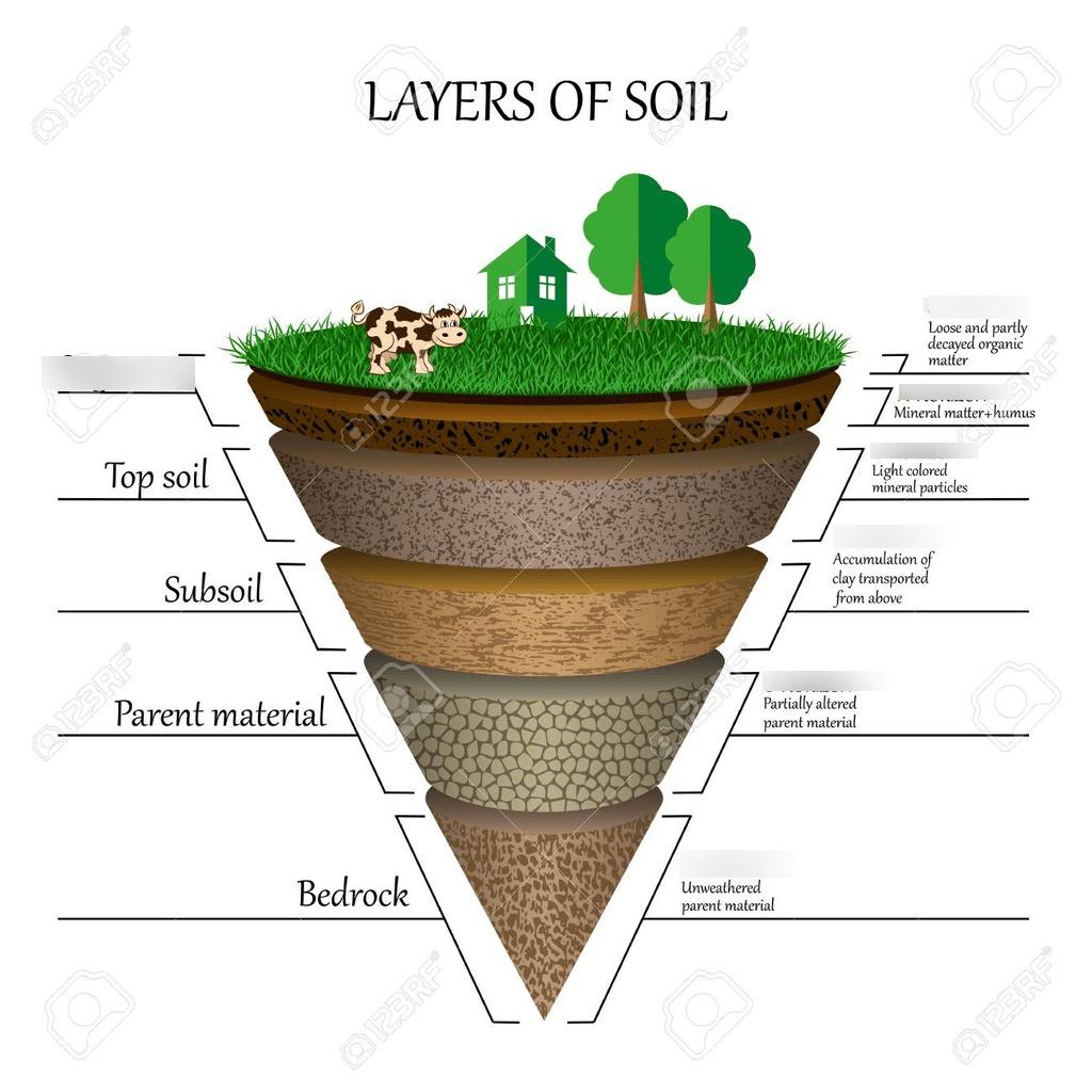 Leach Field Definition Quizlet