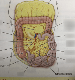 terms in this set 10 superior mesenteric artery  [ 1024 x 768 Pixel ]