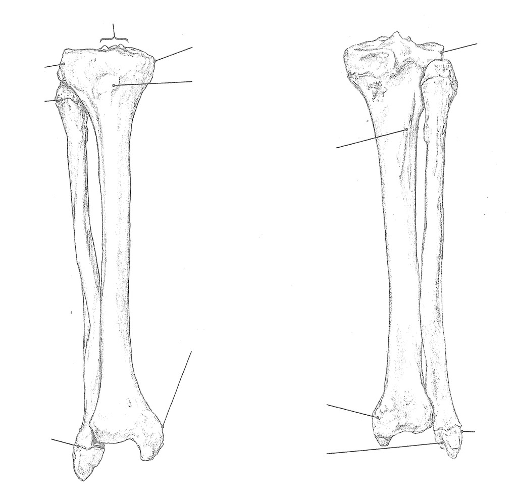 hight resolution of bone tibia and fibula right anterior and posterior view