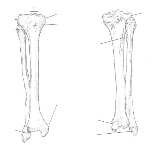 small resolution of bone tibia and fibula right anterior and posterior view