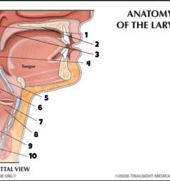 anatomy of the larynx part 1 [ 1024 x 771 Pixel ]