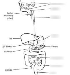 digestive system diagram [ 810 x 1024 Pixel ]