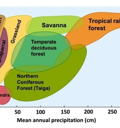 diagram of the temperate forest [ 1024 x 768 Pixel ]