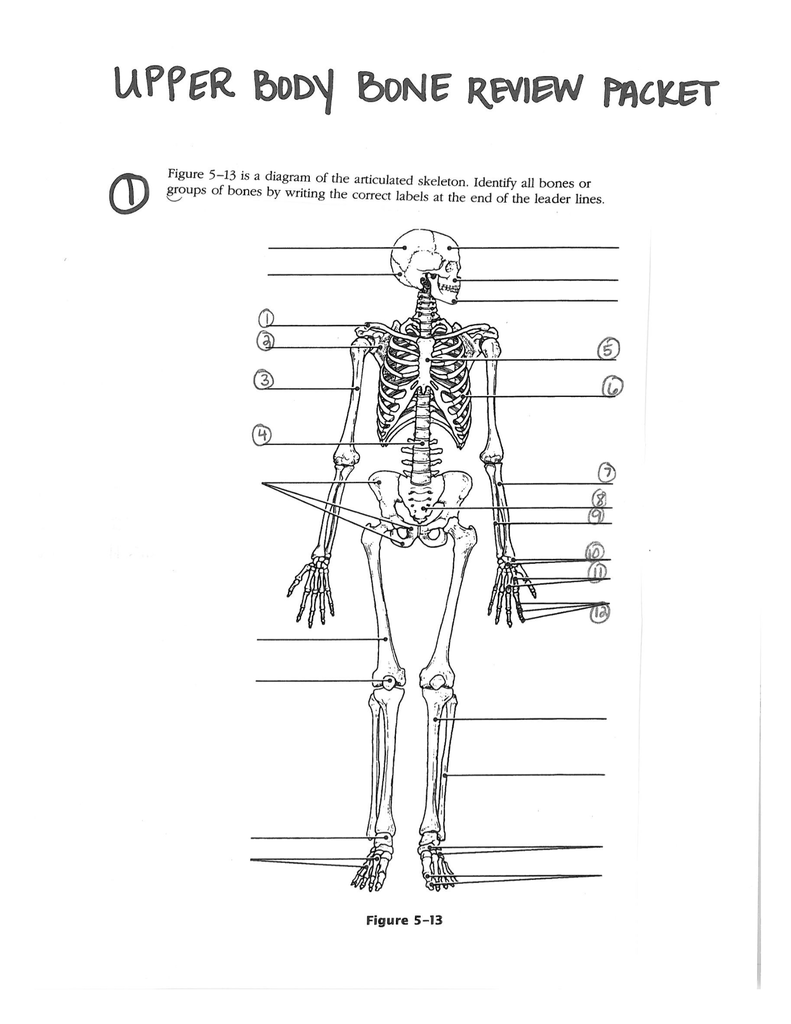 Figure 5 13 Is A Diagram Of The Articulated Skeleton