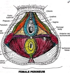muscles of the perineum exam 3  [ 1024 x 890 Pixel ]