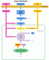 PBL 3 - Lactose Intolerance flashcards | Quizlet