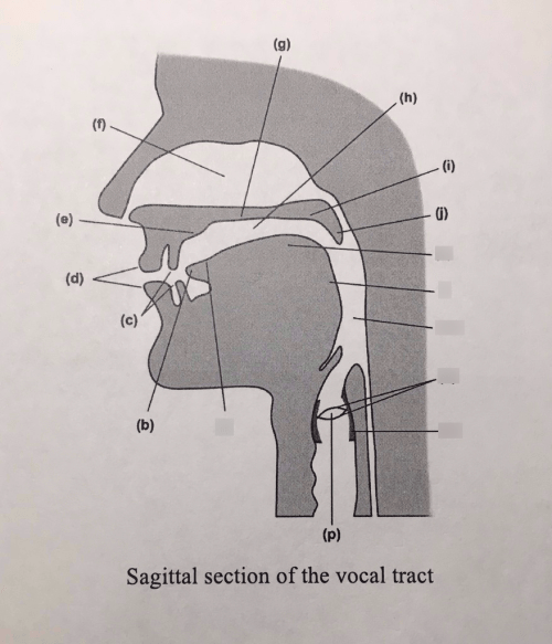 small resolution of sagittal section of the vocal tract diagram quizlet vocal mechanism anatomy vocal tract diagram