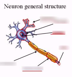 neuron diagram [ 1024 x 768 Pixel ]
