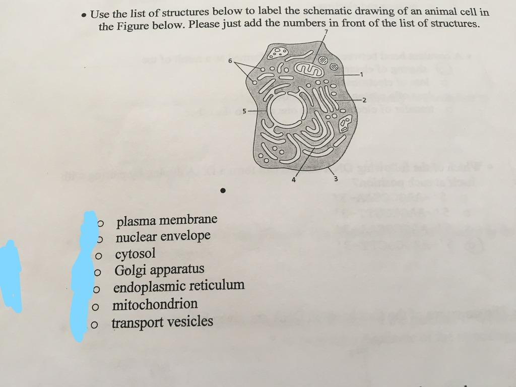 65+ Quizlet Phlebotomy - Phlebotomy Chapter 7 Circulatory