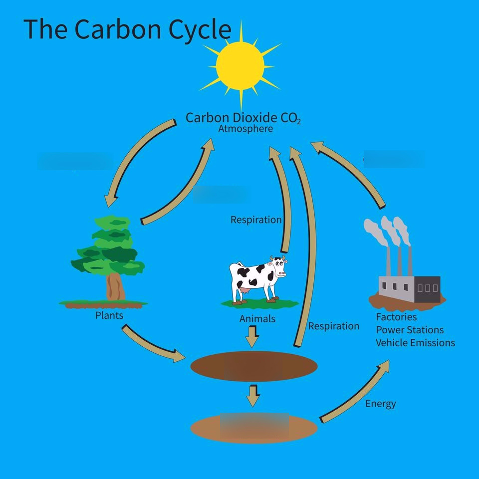hight resolution of carbon cycle