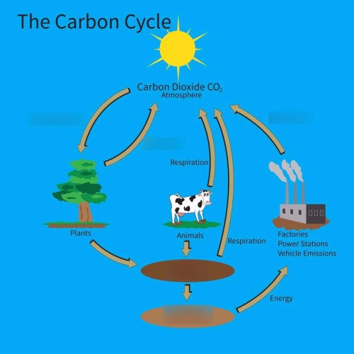 small resolution of carbon cycle