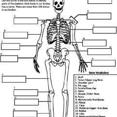 Rib Cage Bone Diagram Sewing Machine Parts Worksheet Bones Quizlet Location
