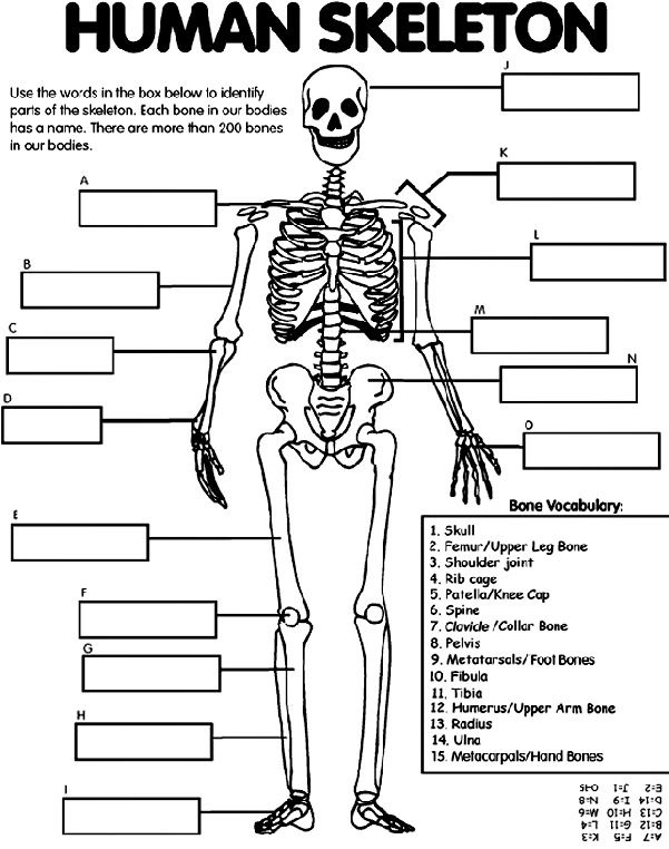 rib cage bone diagram football play software free bones quizlet location