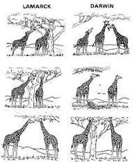 Theory Of Evolution: Difference Between Lamarck And Darwin