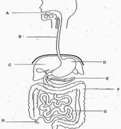 disgestive diagram [ 823 x 1024 Pixel ]