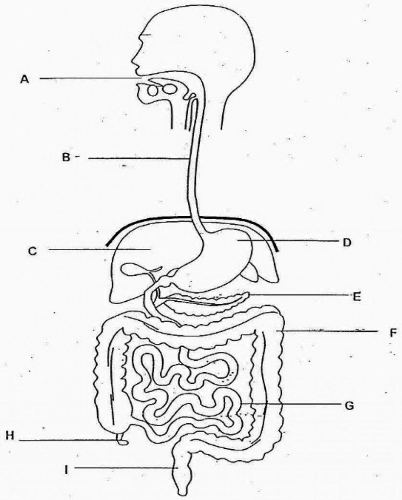 hight resolution of disgestive diagram