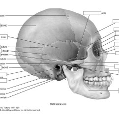 Axial Skeleton Skull Diagram Curt Trailer Hitch Wiring 1 Quizlet Location