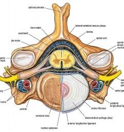 grant u0027s anatomy w2 vertebral canal spinal cord and meninges [ 1024 x 920 Pixel ]