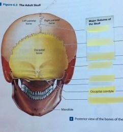 skull dental diagram [ 1024 x 908 Pixel ]