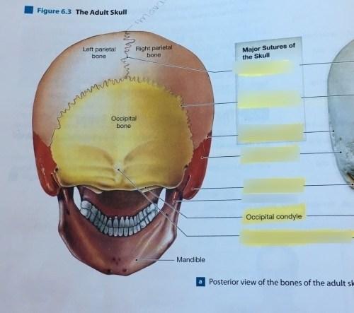 small resolution of skull dental diagram