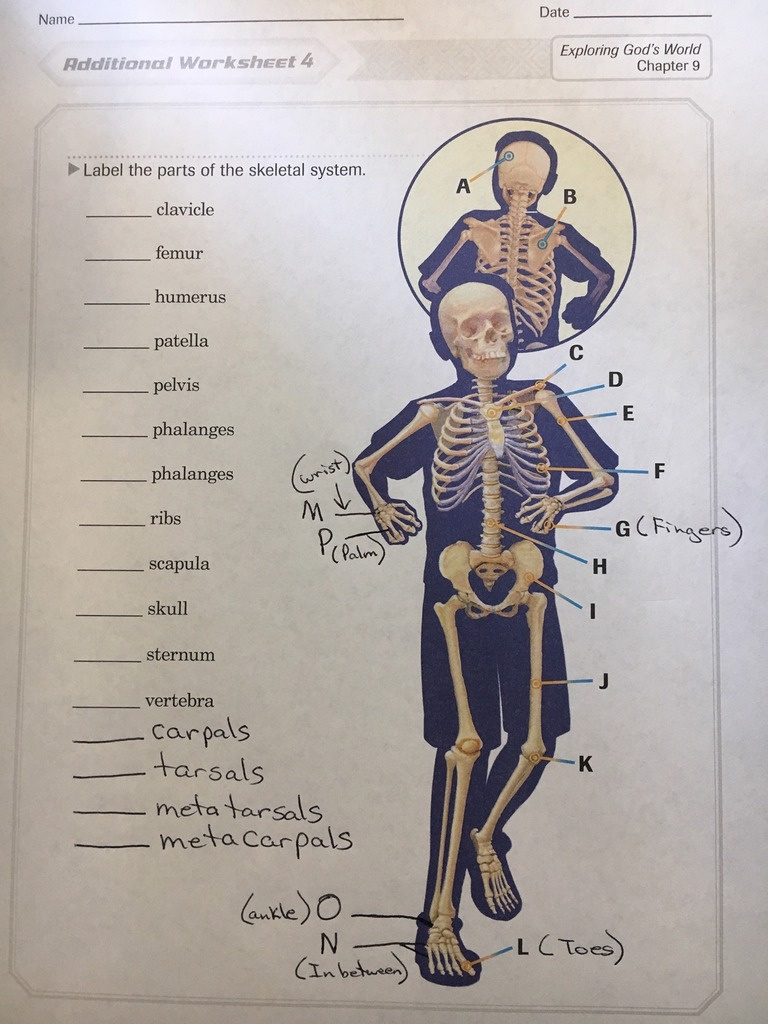 hight resolution of 4th Grade Abeka Health Quiz 9 and Health Test 3 Chapters 1-7 Diagram    Quizlet