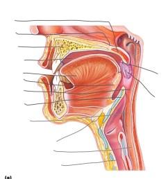diagram oral cavity [ 836 x 1024 Pixel ]