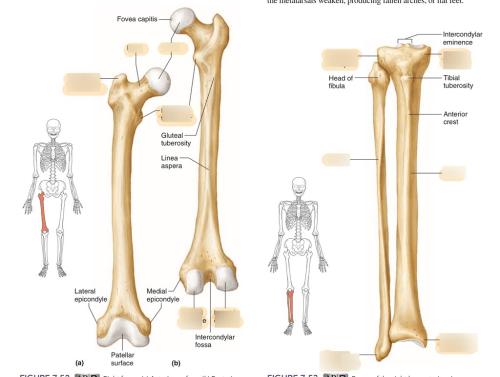small resolution of leg bones