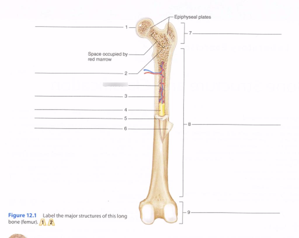 hight resolution of bone