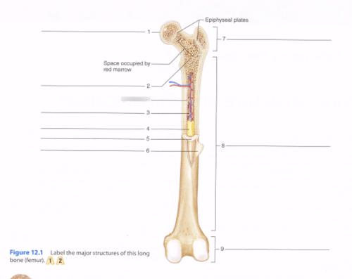 small resolution of bone