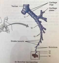 branching diagram [ 897 x 1024 Pixel ]