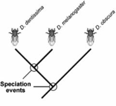 Evolutionary Biology: Evolutionary Biology Quizlet